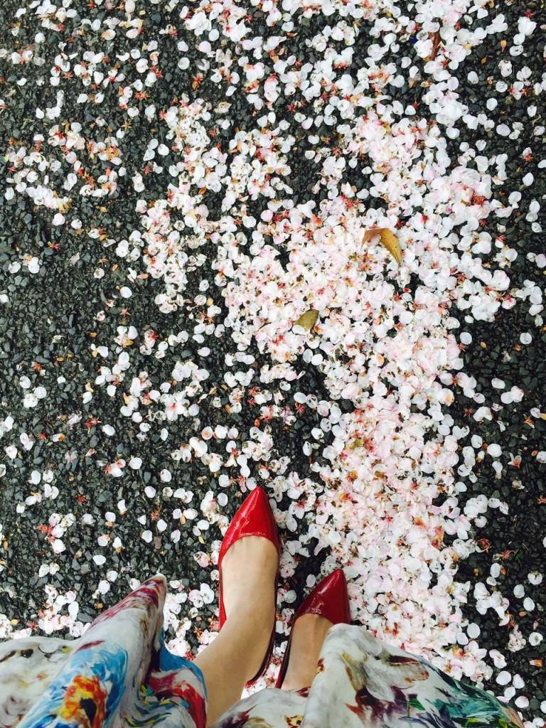赤いくつと桜